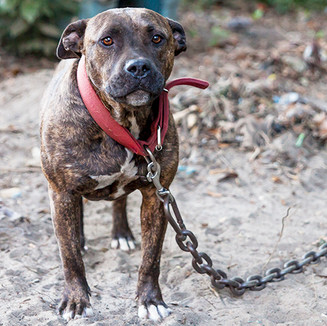 a-closer-look-at-dog-fighting_main-image