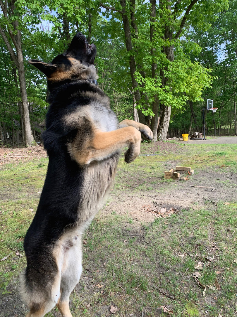 Koba (1 year)