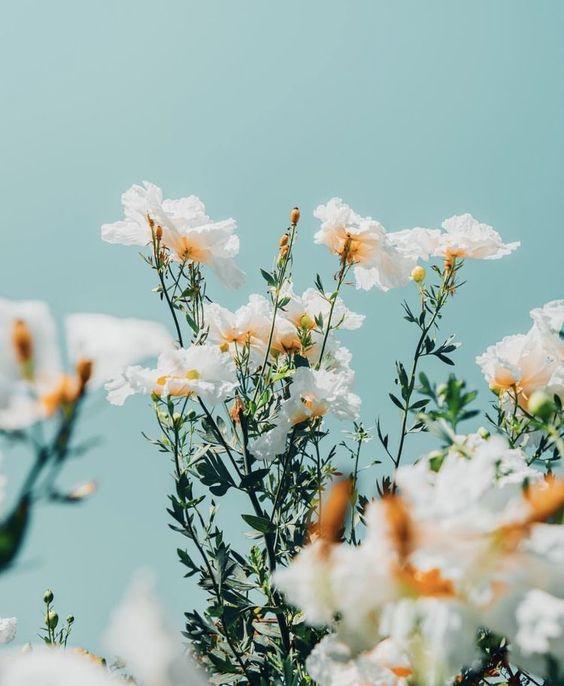 Portuguese Flora