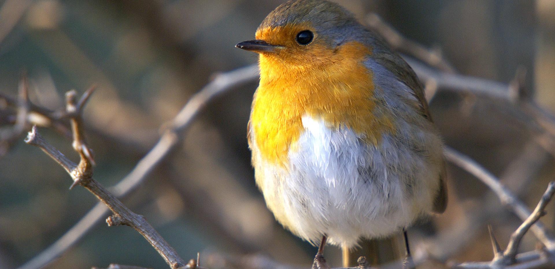 Birdlife costa vicentina