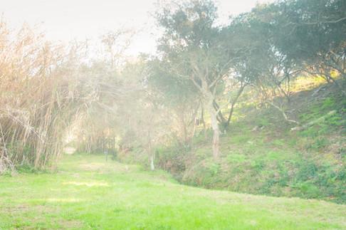 nature yoga retreat
