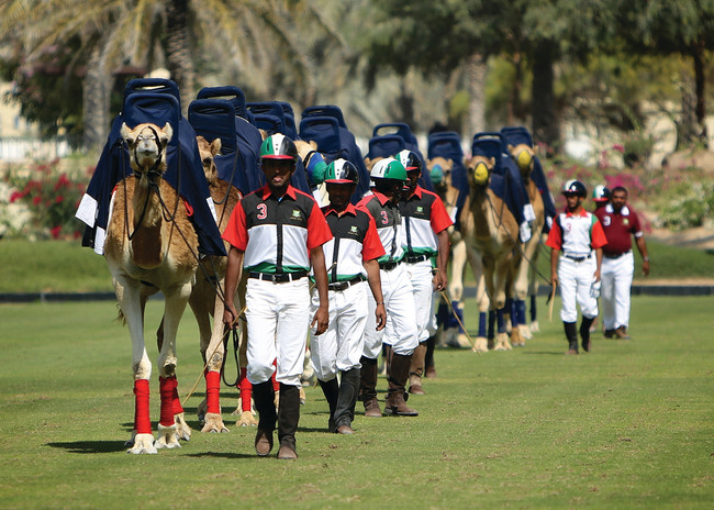 Camel Polo: An Arabian Twist on the King of Sports