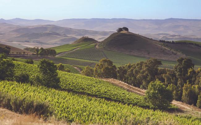 A Sicilian Wine renaissance