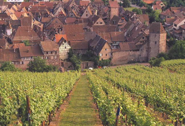 The Integrity of Artisan Wines
