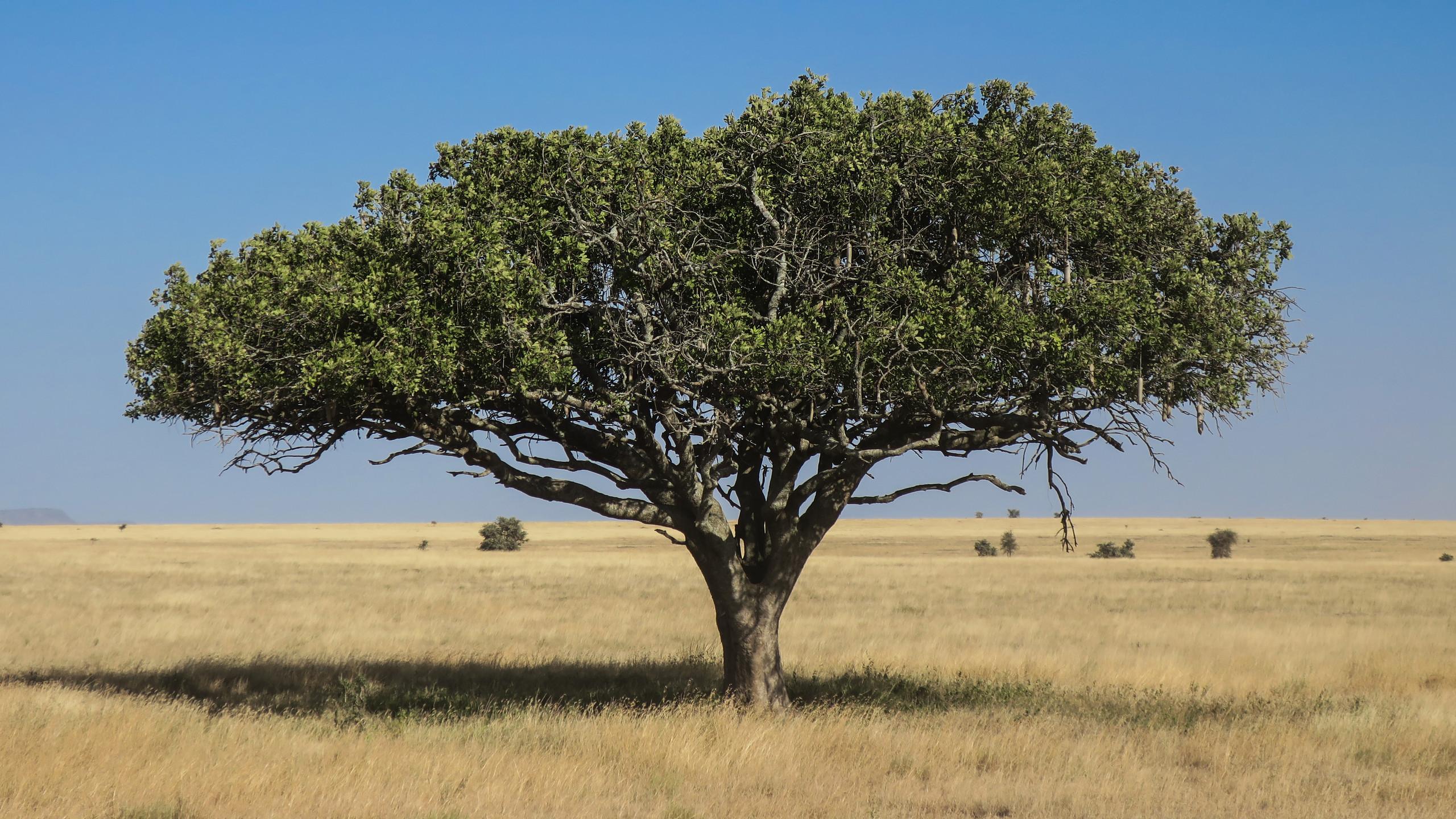 Stunning Serengeti