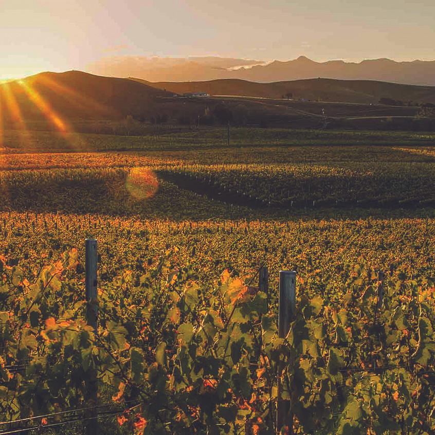 Marlborough-Vineyards-New-Zealand-9x16