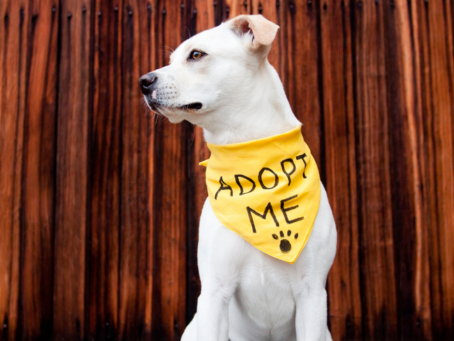 Must Love Dogs: Pet Adoptions Soar as Isolation Lingers