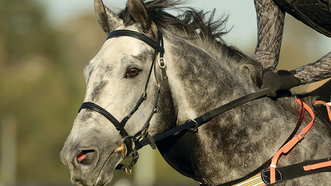Horse-Human Connection: Horses Recognize Our Emotions