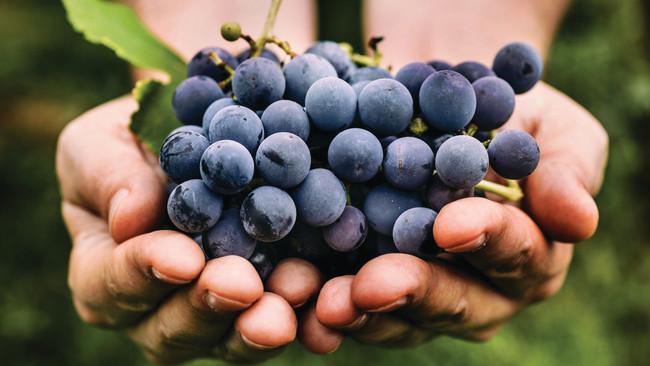 Harvest: The Wonder of Making Wine