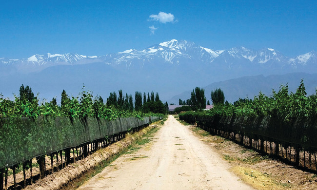 Argentine Wine: Best Paris with Tango, Tapas, Borges, and Polo