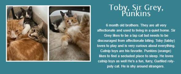 Toby, Sir Grey, Punkins.jpg