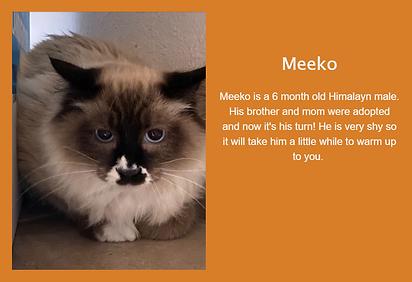 Meeko.png