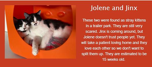 Jolene Jinx.png
