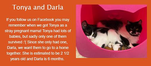 Tonya Darla.png