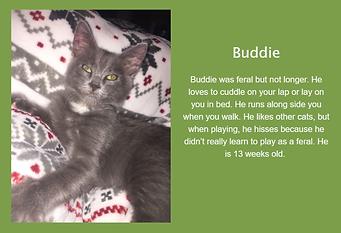 Buddie.png