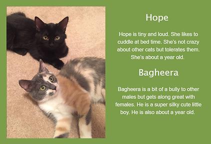 Hope Bagheera.png