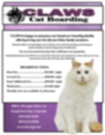 catboarding.jpg