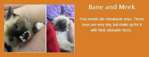 Bane and Meek.jpg