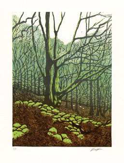 'Sheep in the Wood'