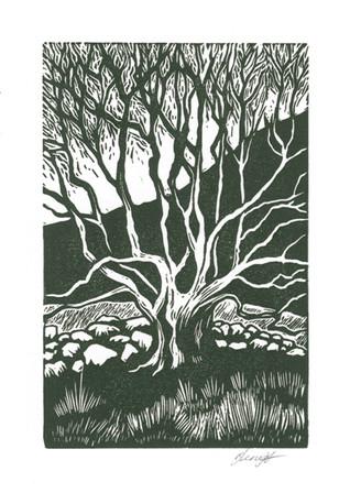 'Old Tree'