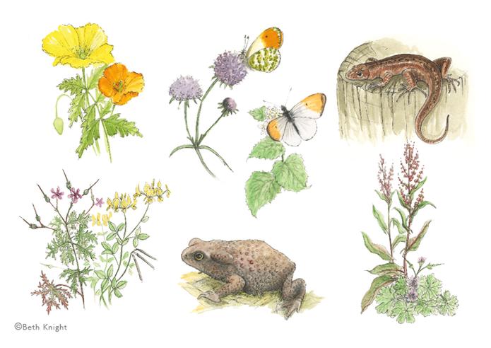Illustrations flowers BethKnight.png