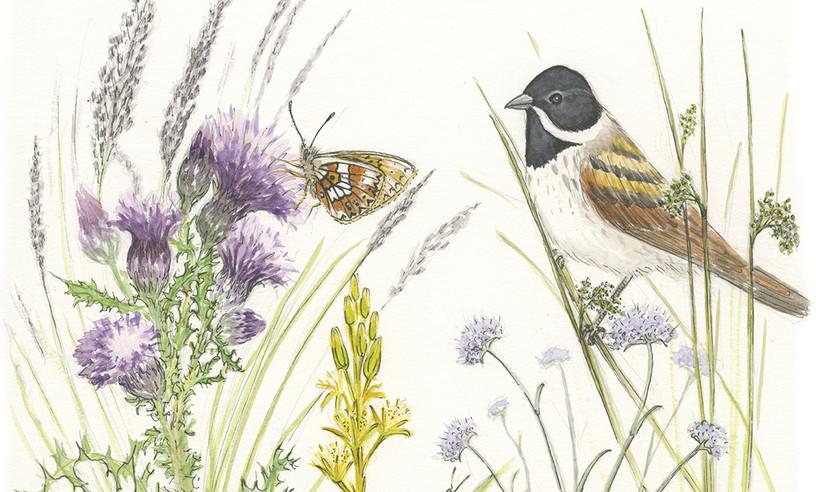 Beth Knight wildlife artist illustrator