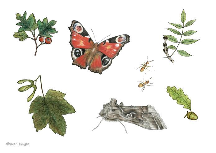 Illustrations leaves BethKnight.jpg