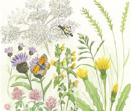 Hayfield book illustration BethKnight_ed