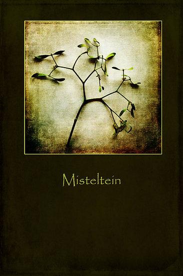 Misteltein - Misteltoe