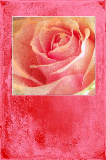 Rose - Rosy