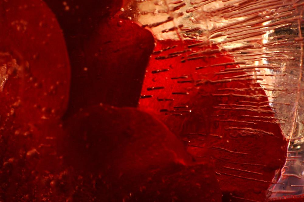 Makrofoto av blomst i is