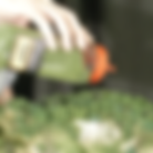 5116_GroundCover.png