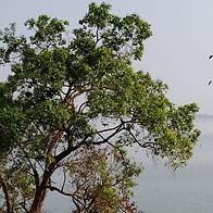 Woodland Scenic Trees