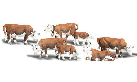 N Hereford Cows