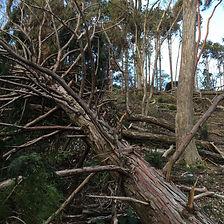 tree kits.jpg
