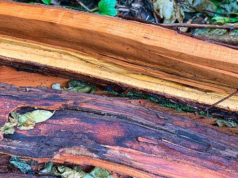 split wood.jpg