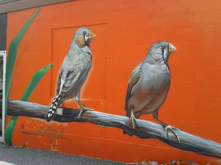 Orange Birds, Hamilton Ave