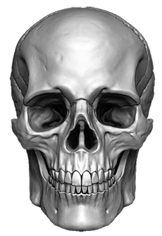 skull-png.png