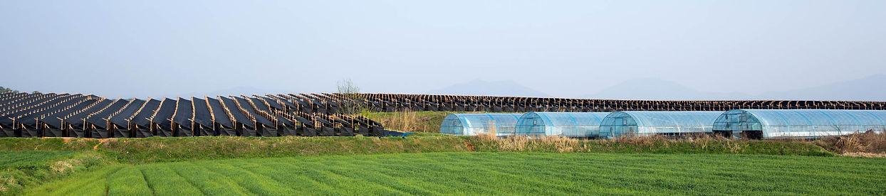 Ginseng farm 1800x400.jpg