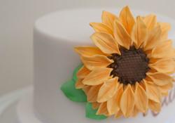 sunflower sugar