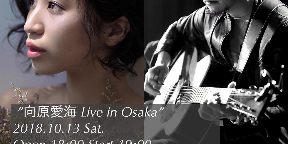 向原愛海×石本大介 LIVE IN OSAKA【大阪】 (1)