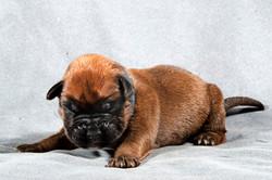 Pup III 9815