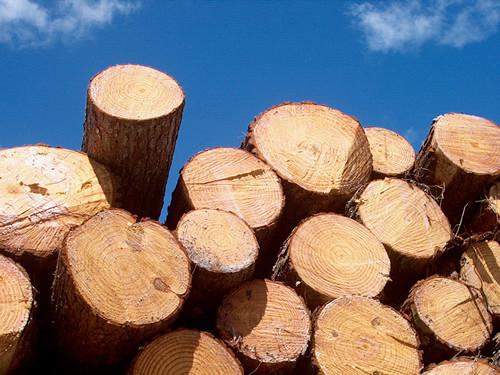 espécies de madeira para arcos para instrumentos de corda
