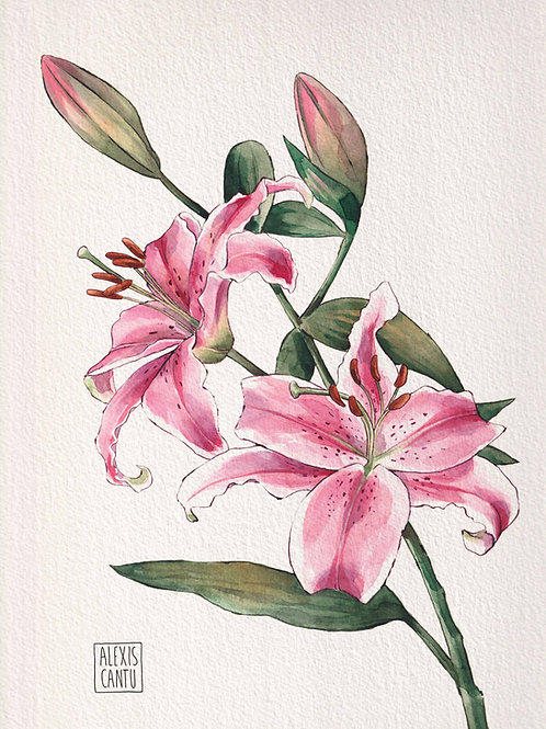 Stargazer lily art print