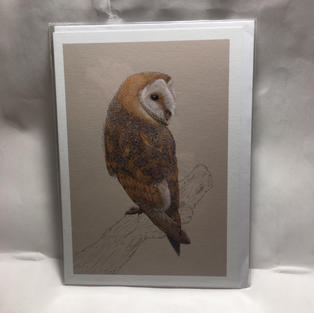 Barn Owl on Tan - Notes & Queries