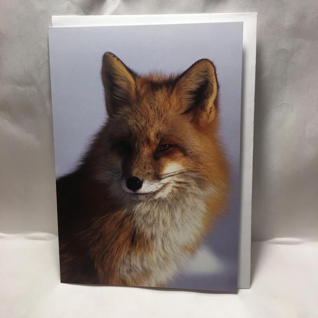 Red Fox Portrait - Pomegranate