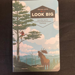 Look Big by Rachel Levin