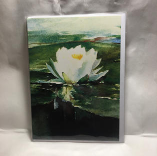 White Water Lily Sympathy - Notes & Queries