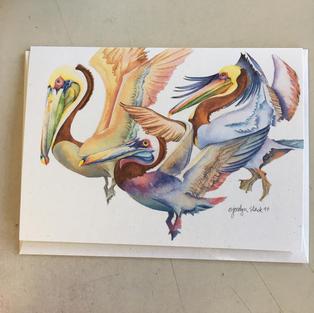 Pelicans - Crane Creek
