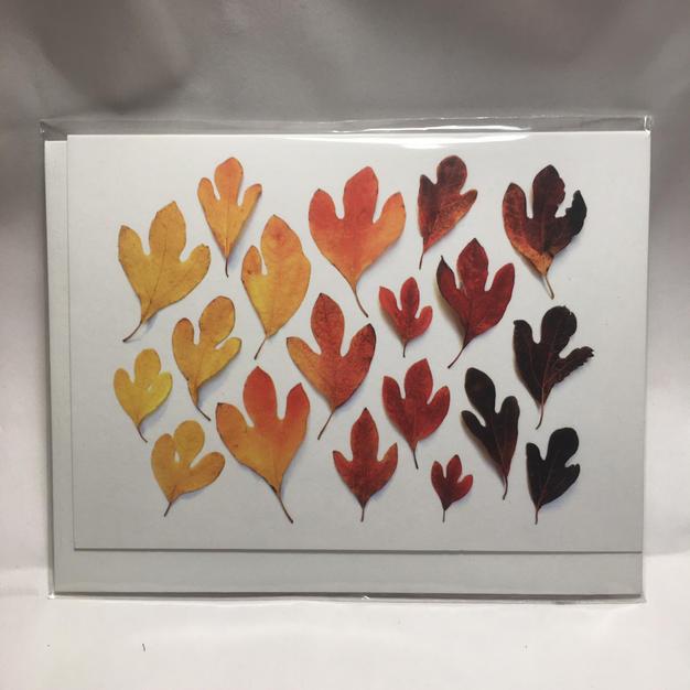 Leaf Spectrum - Bottle Branch